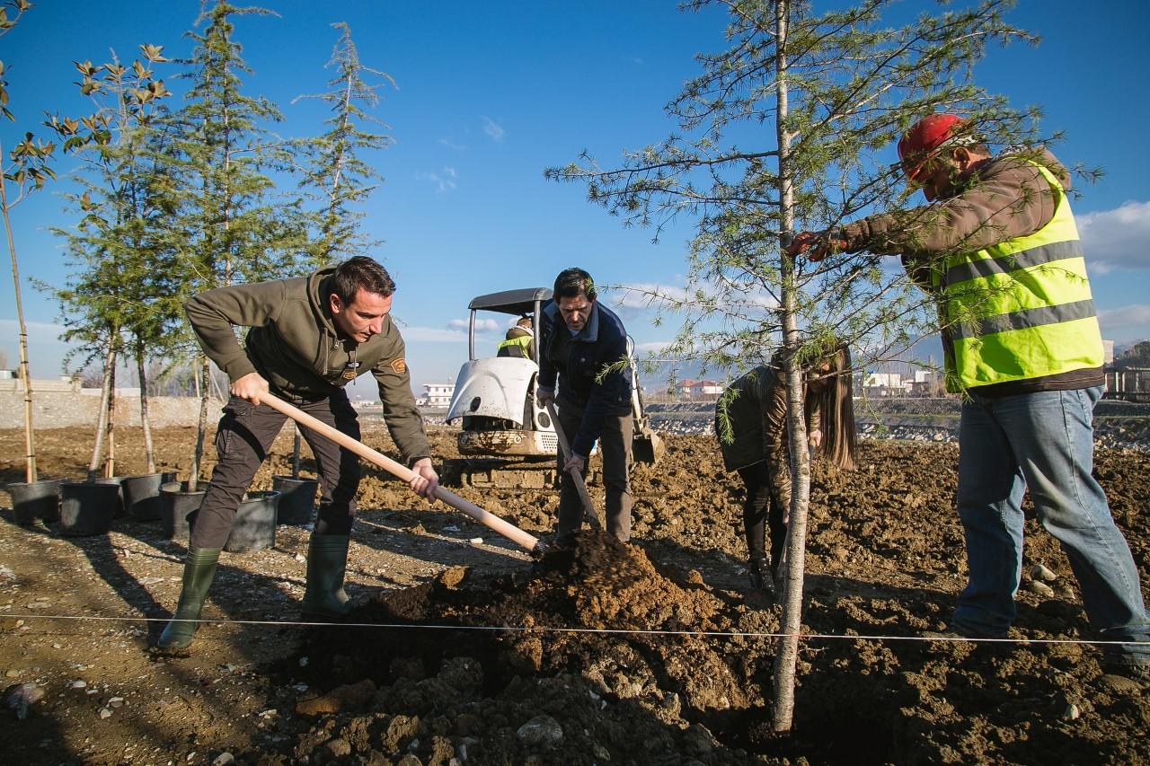 Përfundojnë skarpatet në Bregun e Lumit, Bashkia mbjell 4 mijë pemë