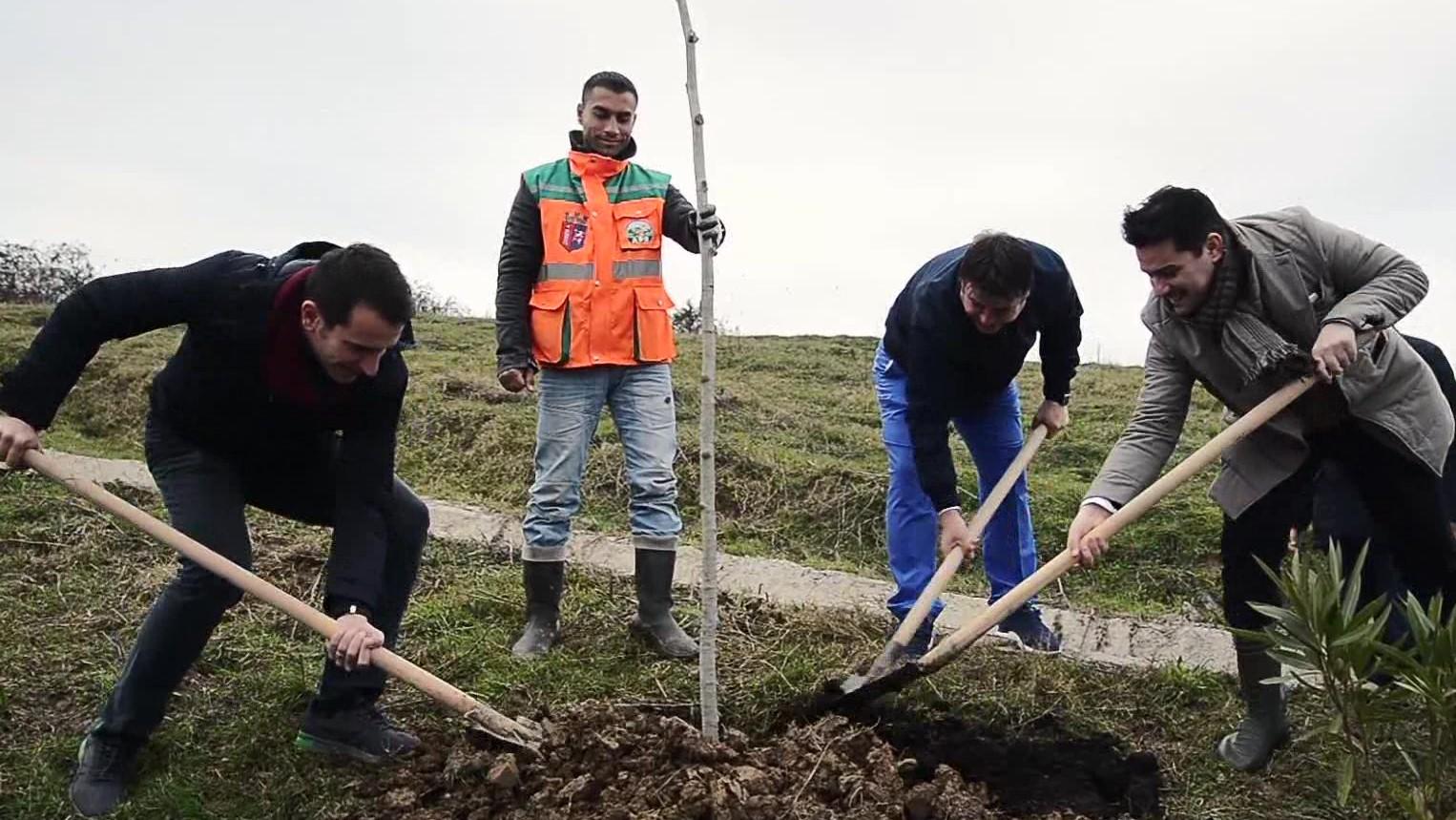 77 mijë pemë të mbjella në Tiranë, tenori Saimir Pirgu i bashkohet nismës së Bashkisë