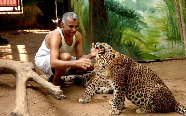 """Indiani që """"bashkëjeton"""" me leopardët dhe arinjtë"""