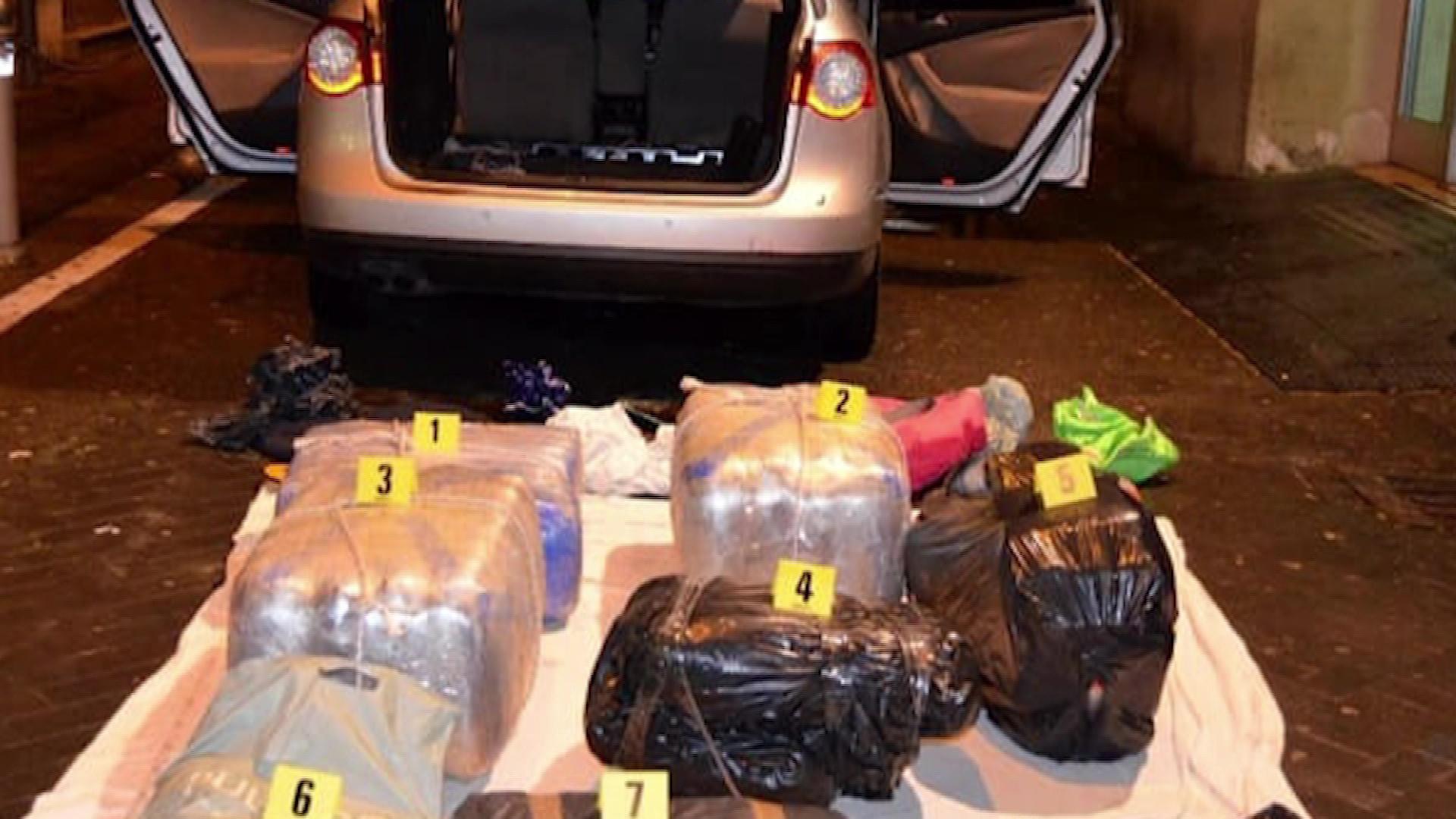100 kg marijuanë në Bolonja, arrestohet shqiptari