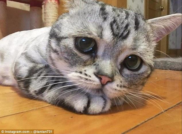Macja më e trishtë në botë…