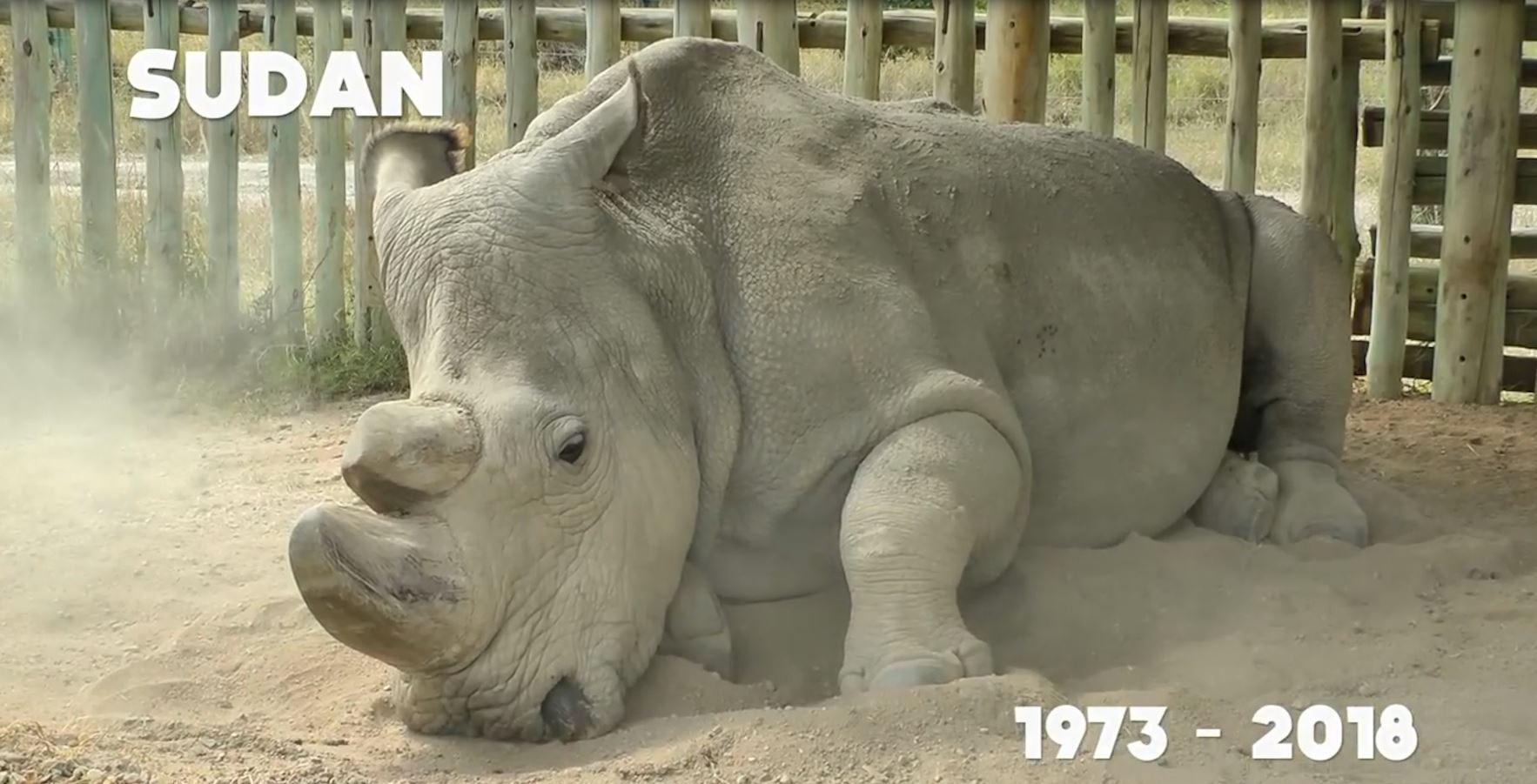 Kenia, ngordh rinoceronti  i fundit mashkull në botë