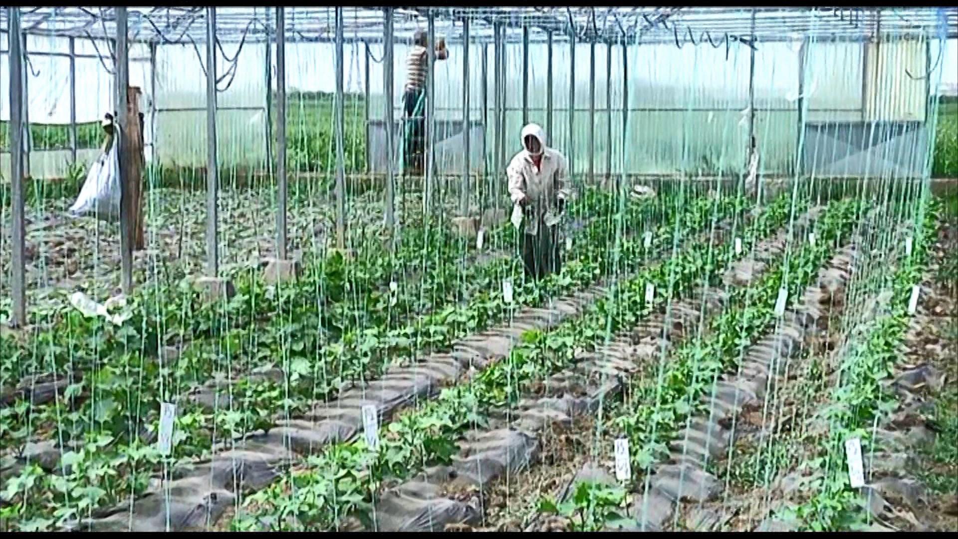Fermerët në Lushnjë kanë nisur sezonin e mbjelljeve, frikë nga farat