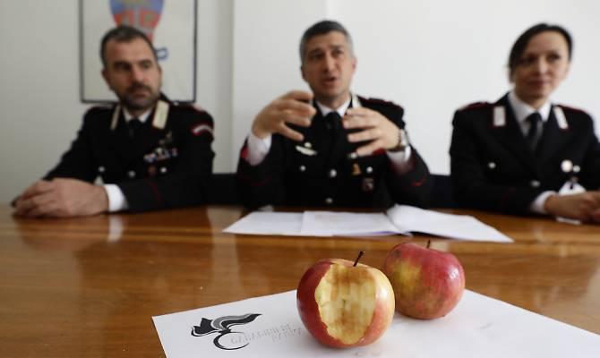Vidhte shtëpitë dhe linte një mollë të kafshuar/ Arrestohet shqiptari