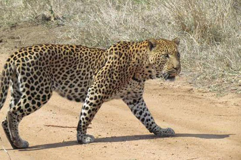 leopardi.jpg