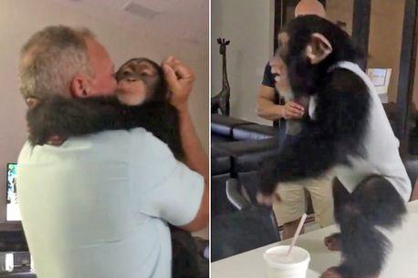 Video/ Lidhja e fuqishme mes njerëzve dhe kafshëve