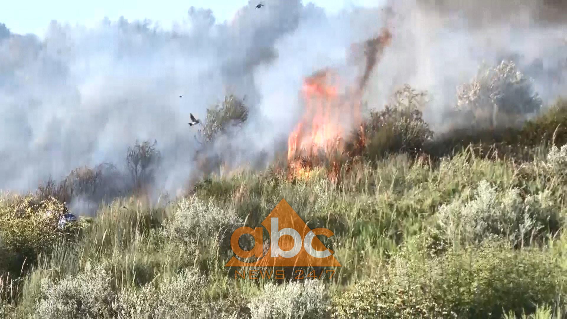 Video/ Zjarr i fuqishëm në kodrat me ullinj të Lushnjes