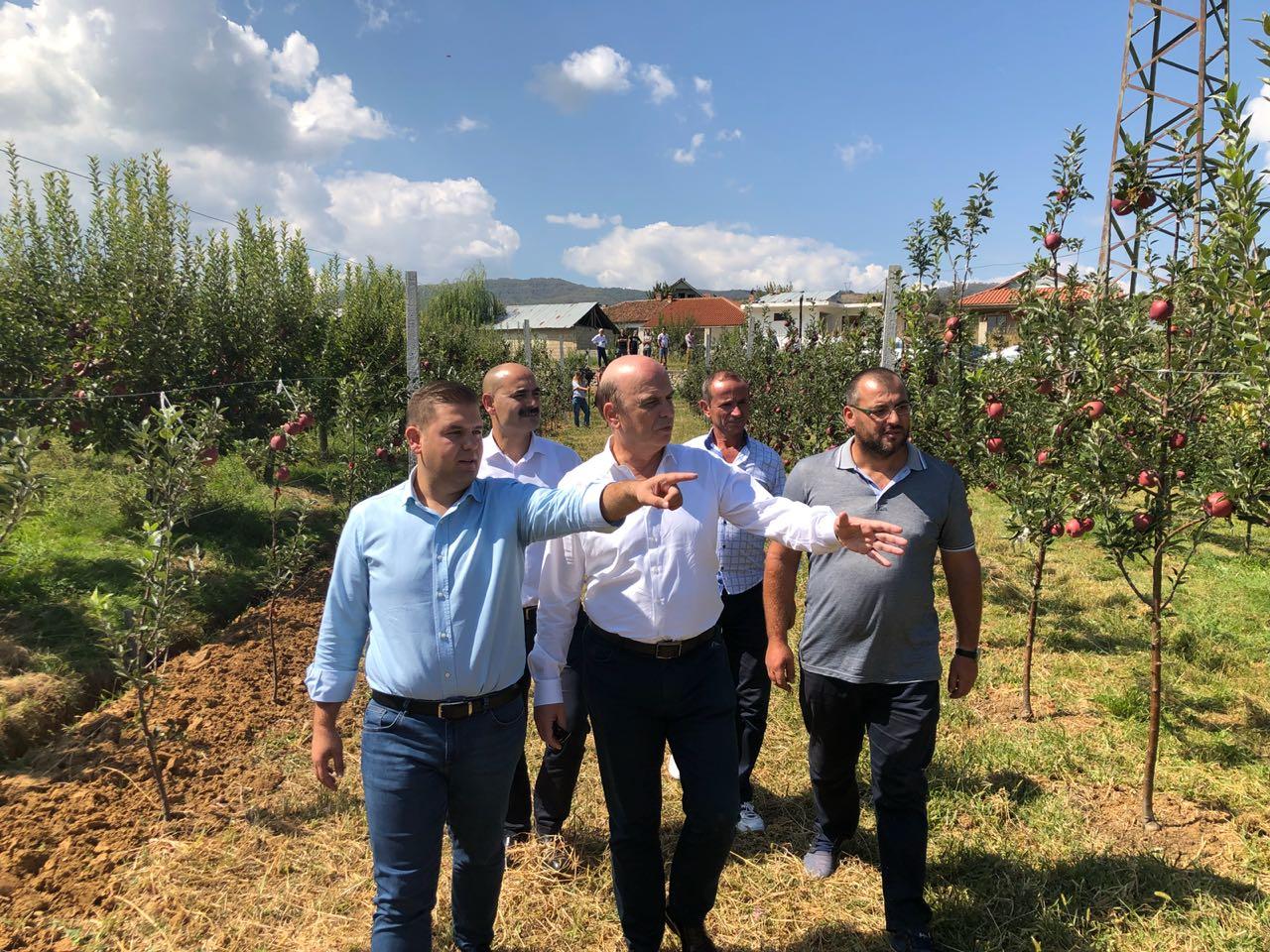 Panariti nga Pogradeci: Qeveria t'u japë paratë e premtuara fermerëve
