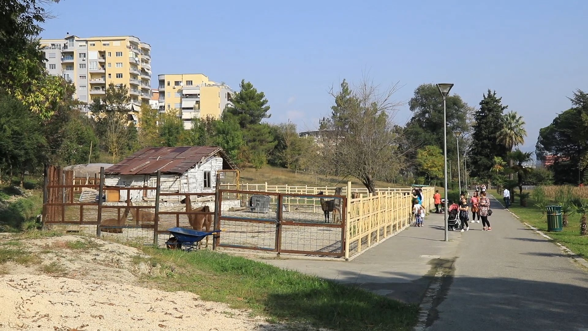 """Kafshët e """"Safari Park"""" vijnë në kopshtin zoologjik në Tiranë"""