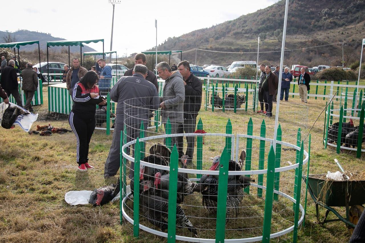 Hapet për të tretin vit tregu i shpendëve të gjalla në Baldushk