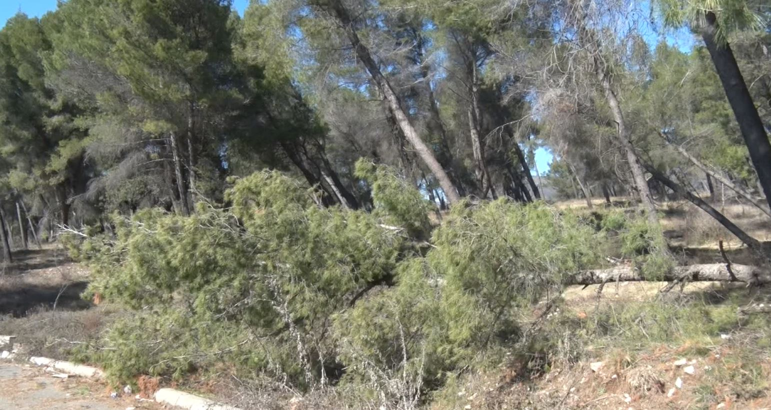 Shkatërrimet e pyjeve nga era në Elbasan, njësoj sikur ka rënë tsunam