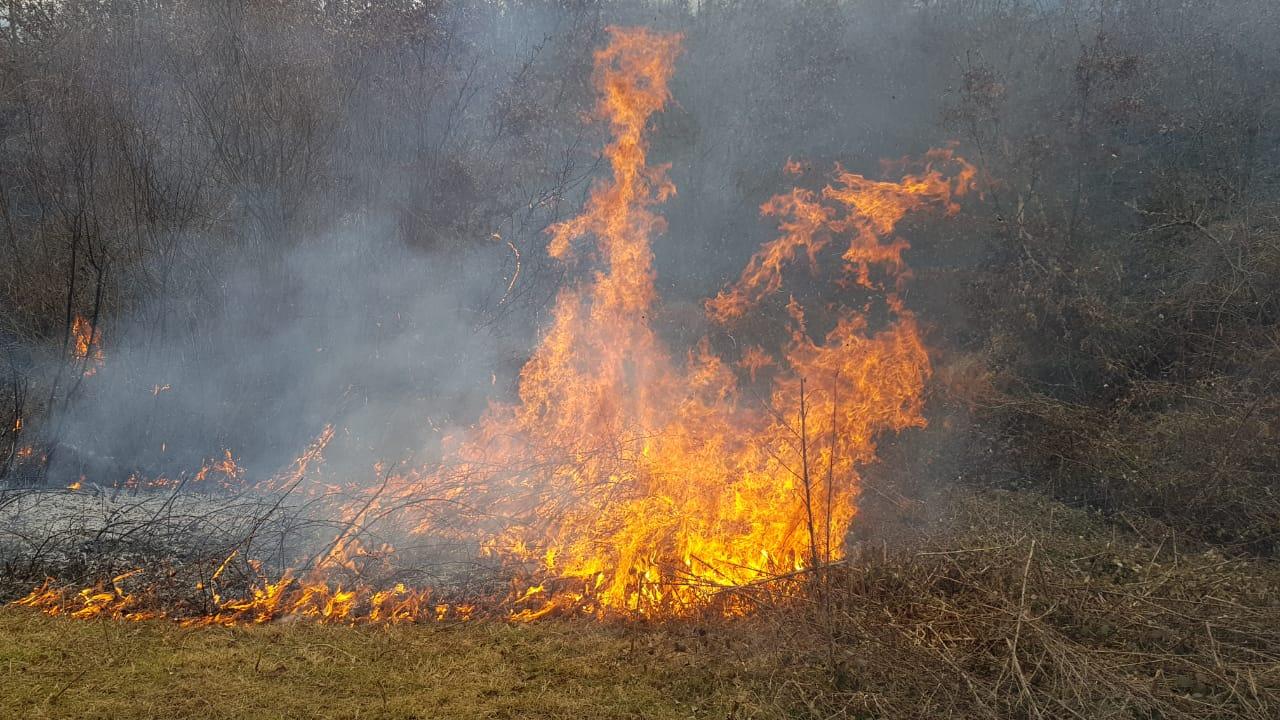 Zjarr masiv në pyjet e Devollit