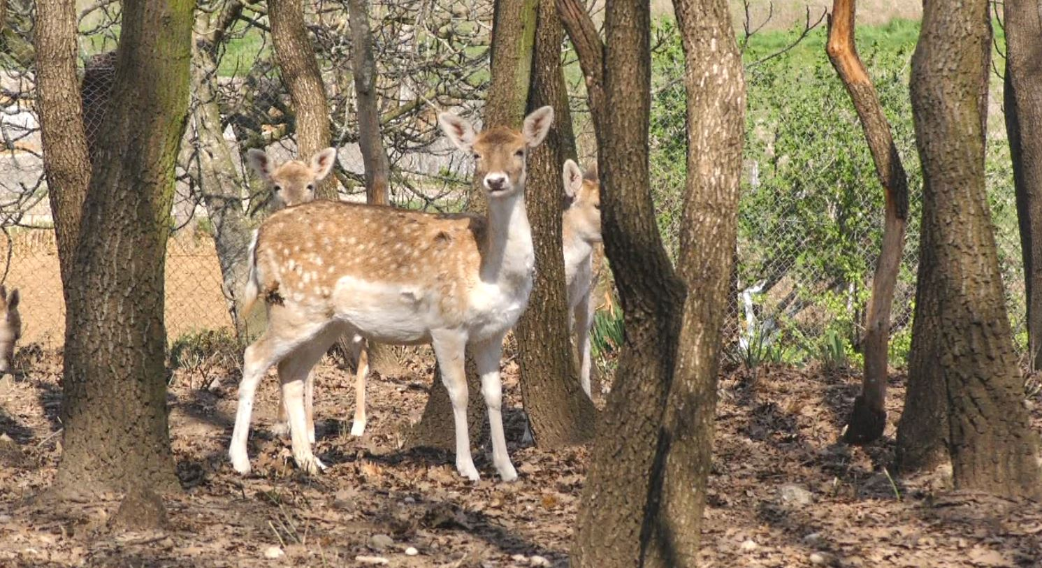 Pylli i Levanit në Fieri, pista vrapimi dhe hapësira për fëmijët