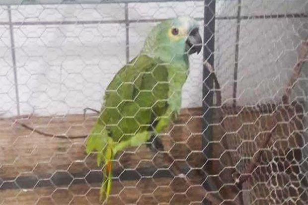 Arrestohet një papagall në Brazil