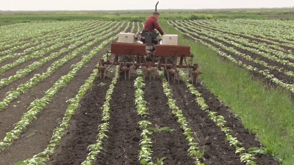 Lushnje, fermerët punojnë tokën duke shënuar borxhet në listë