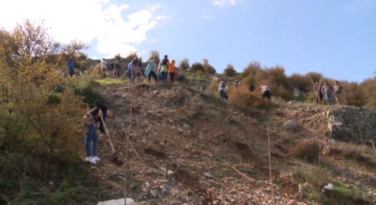 Shkarjet e tokës në kodrën e Kalasë së Lezhës, nis mbjellja e pemëve