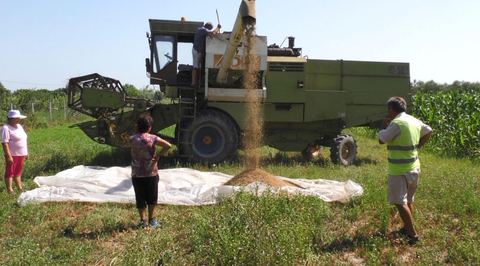Fier, bie miti i hambarit të Shqipërisë me grurë