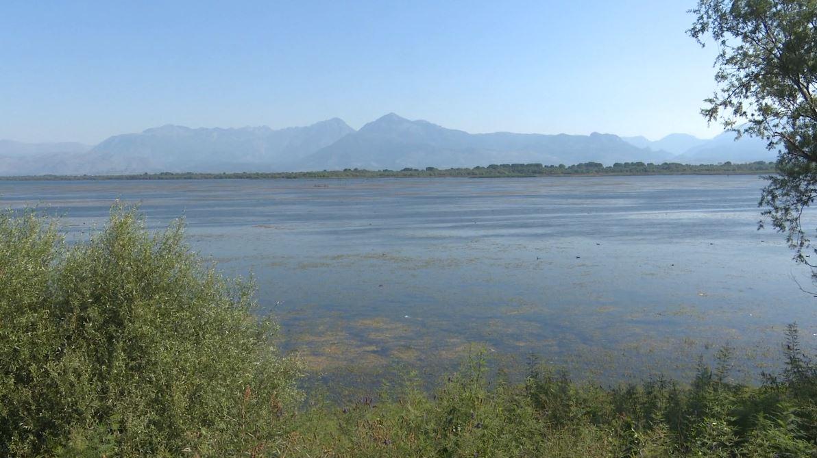 Temperaturat e larta thajnë liqenin e Shkodrës