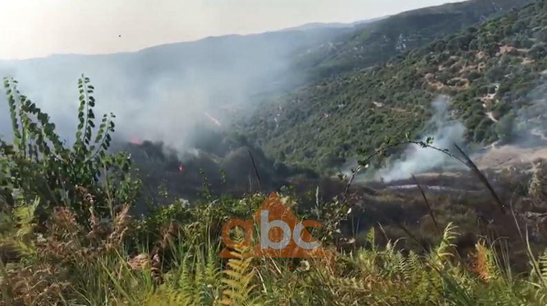 Zjarr në Mallakastër, digjen kodrat me ullishtë