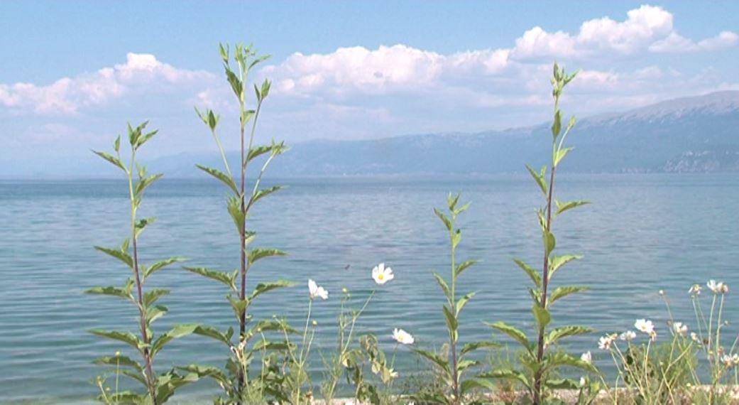 Ndotja nga aktiviteti minerar po zhduk faunën e Ohrit
