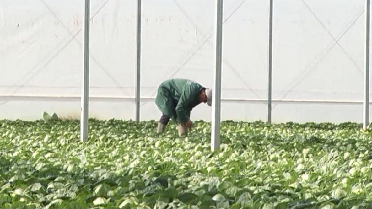 """E vërteta për """"Silicon Mix Fertilizer"""""""