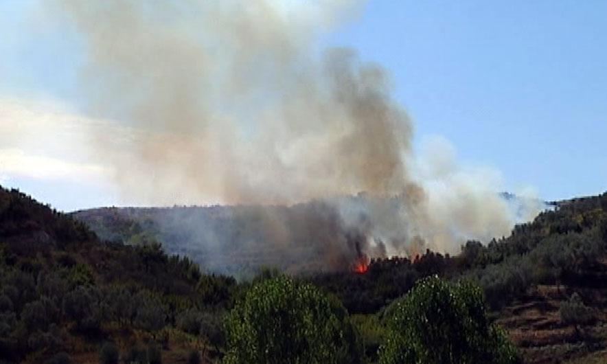 Zjarr masiv në Fier, përfshihet nga flakët kodra me ullinj e shkurre