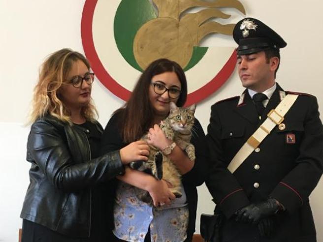 Arrestohet shqiptarja në Torino, kërkoi 1 mijë euro për t'i rikthyer pronares macen
