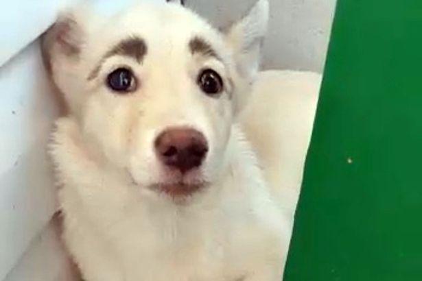 qeni.jpg