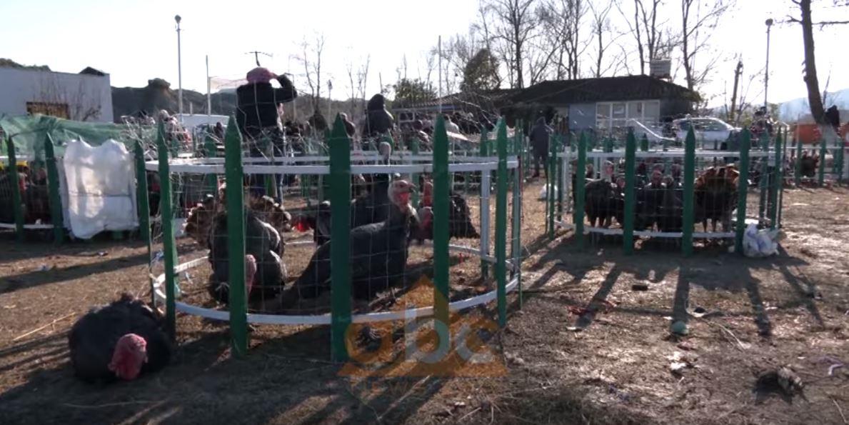 Gjeli i detit mbetet simboli i vitit të ri për shqiptarët pavarësisht çmimeve, fermerët ankohen se shitjet kanë rënë