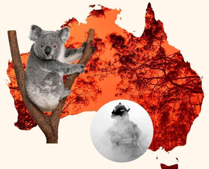 Australia në kaos, rreth 480 milion kafshë janë zhdukur nga zjarret