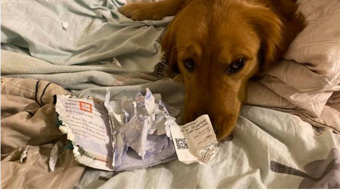 I grisi pasaportën për në Wuhan, qeni i shpëtoi jetën pronares nga virusi vdekjeprurës