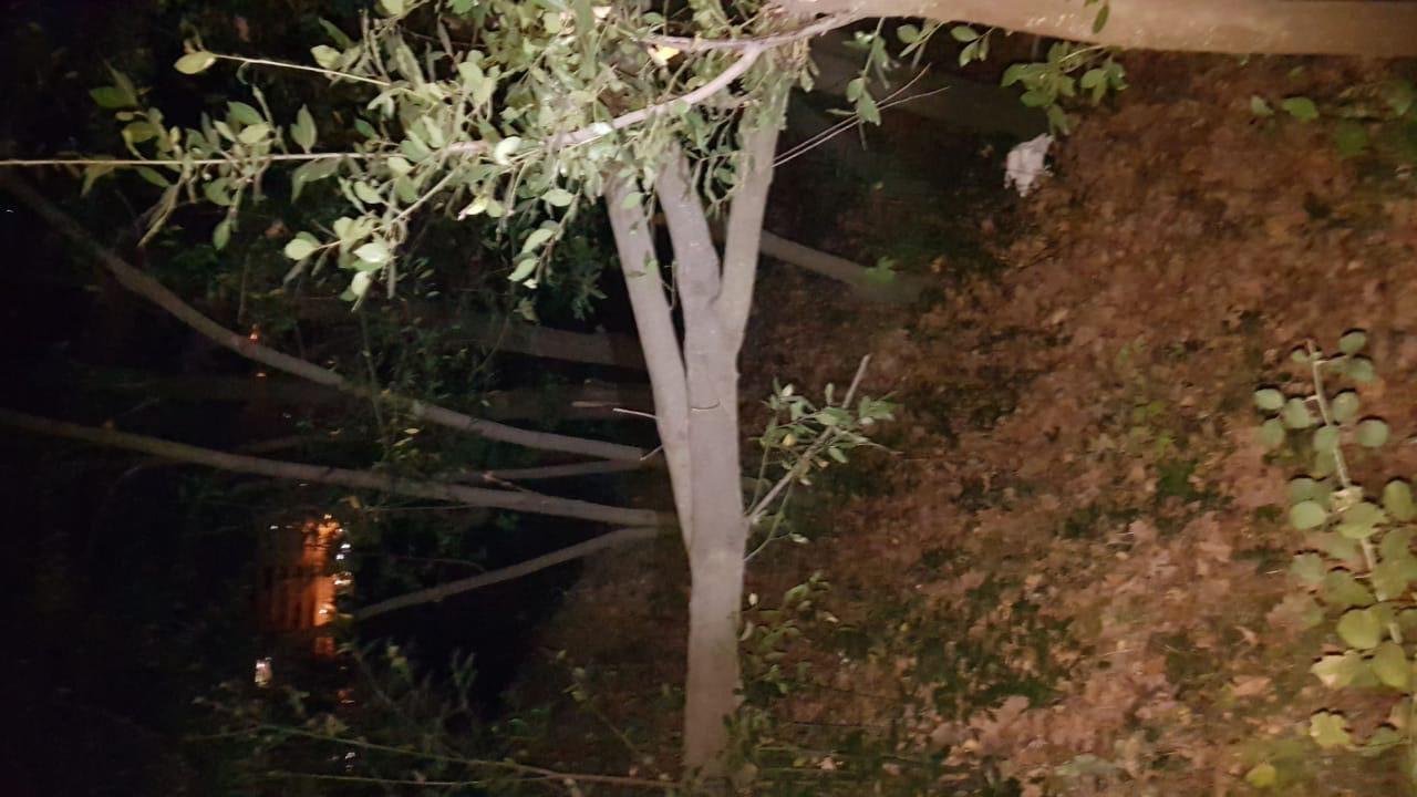 VIDEO/ Era rrëzon pemët tek Kopshti Botanik, dëmtohen telat e energjisë