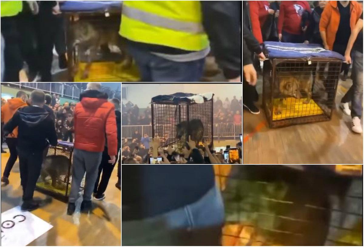 VIDEO/ Trofeu një ujk në kafaz, policia malazeze nis hetimet pas ndeshjes
