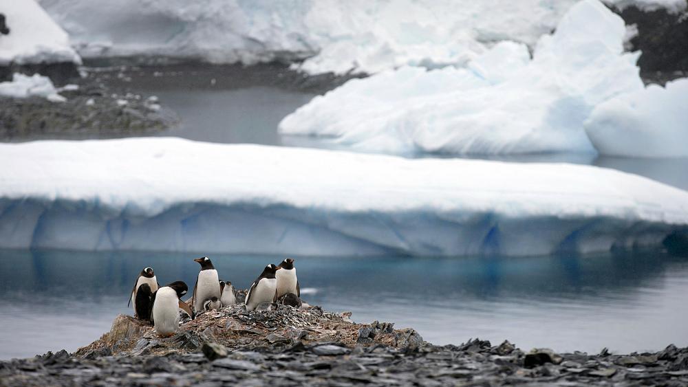 Rekord i ri, rritet temperatura në Antarktidë