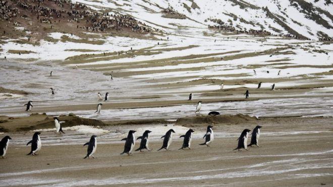 Shënohet rekordi me temperaturat në Antarktidë