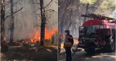 VIDEO / Përfshihet nga flakët një sipërfaqe pylli në Zvërnec