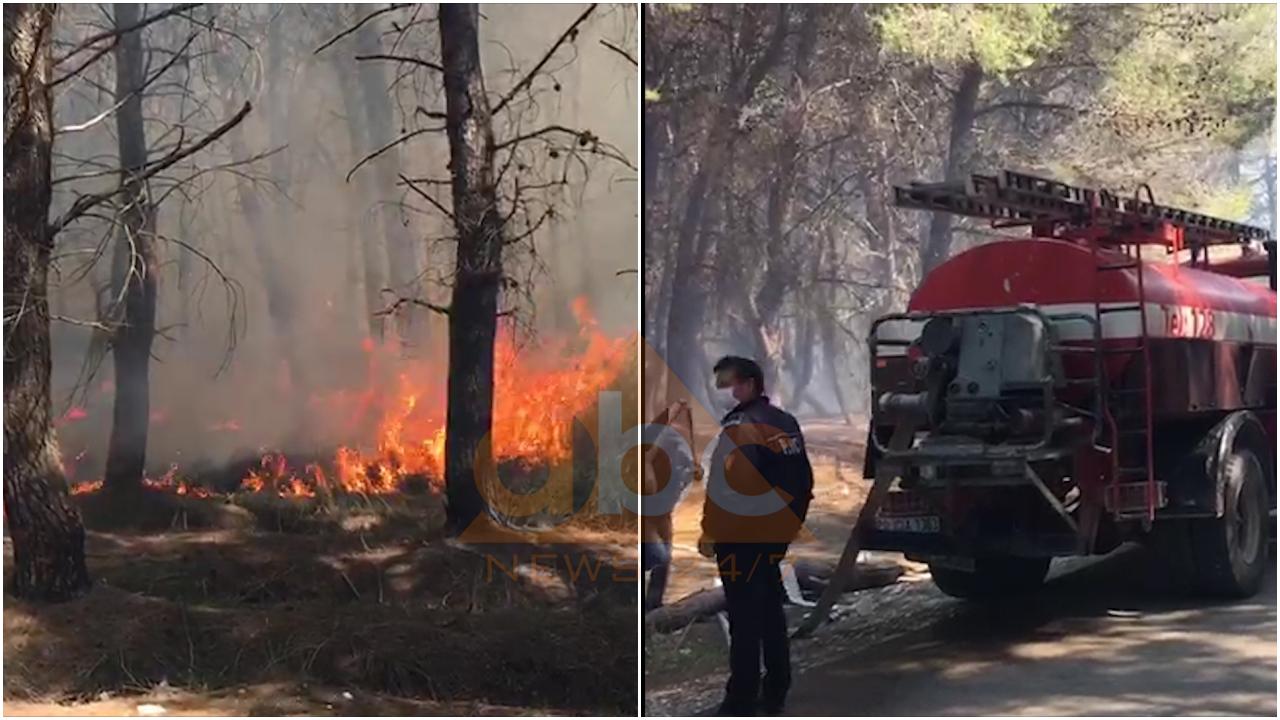 VIDEO / Neutralizohen flakët në Pyllin e Sodës në Vlorë