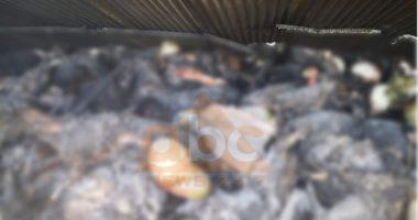 Pakujdesia e çobanit djeg 300 dele në Divjakë