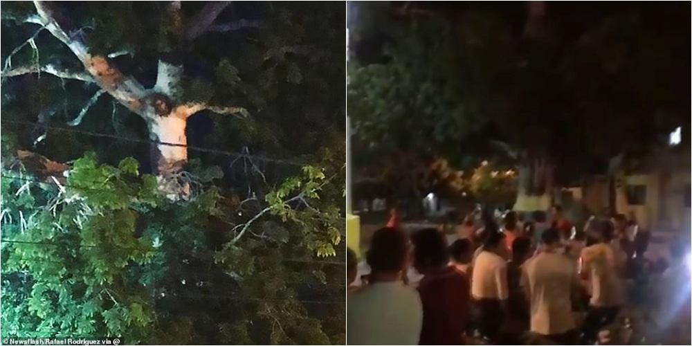 """Kolumbianët thyejnë karantinën dhe dynden tek një pemë ku u """"shfaq"""" Jezusi"""
