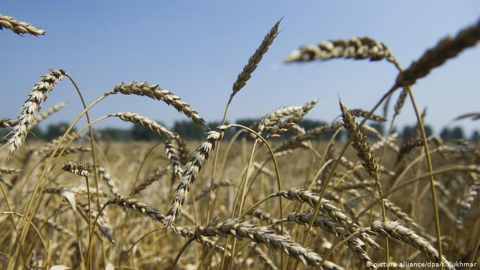 Rusia pezullon eksportimin e grurit për shkak të koronavirusit
