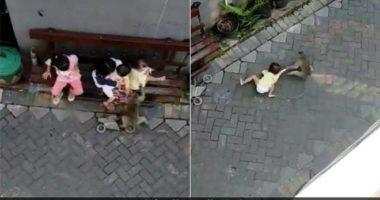 VIDEO/E pazakontë, majmuni tenton të rrëmbejë një vajzë në Indonezi
