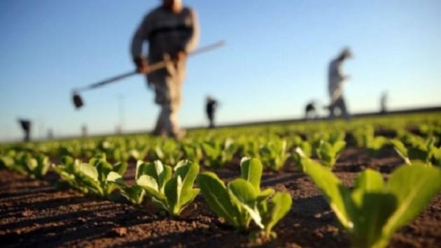 Arrihet marrëveshja me Greqinë për punësimin sezonal të shqiptarëve në bujqësi