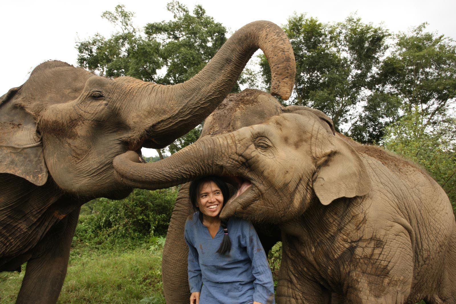 """Elefantët në Tajlandë """"emigrojnë"""" për t'i mbijetuar urisë së koronavriusit"""