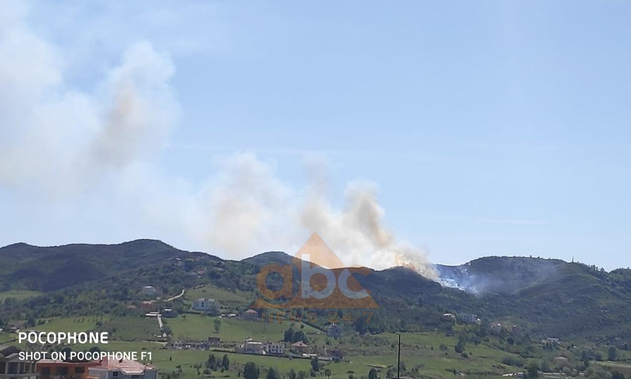 Zjarr i madh në Tiranë, digjet ullishta