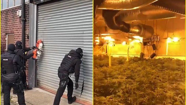 """Policia zbuloi """"fabrikën e kanabisit"""", dënohen tre shqiptarë në Angli"""