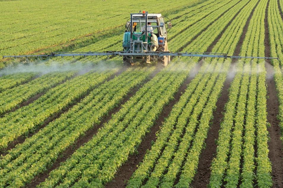 Covid 19 ndikim negativ në të gjithë ekonominë, rënia më e madhe në sektorët e shërbimeve dhe bujqësisë