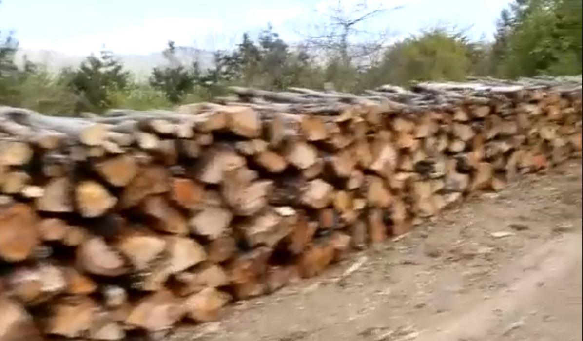 Jamarbër Malltezi: Po kryhet masakër në Malin e Lunikut, ku është Lleshaj kur lëvizin maunet me dru