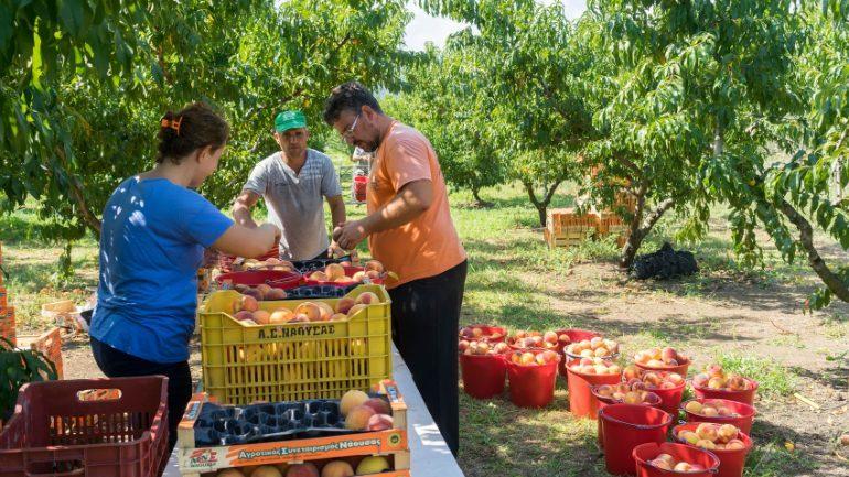 Greqia përzgjedh 15 mijë punonjës sezonalë nga Shqipëria! Do i matet temperatura në Kakavijë