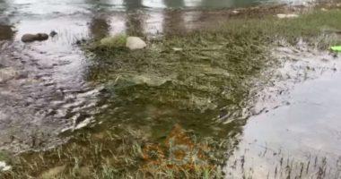 Shkumbini, lumi i mbeturinave, plehrat dhe ujërat e zeza po shkatërrojnë gjithçka