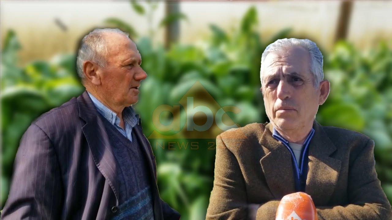 """""""Nuk shohim dritë në fund të tunelit!"""" Fermerët e Vaut të Dejës hedhin produktet bujqësore"""